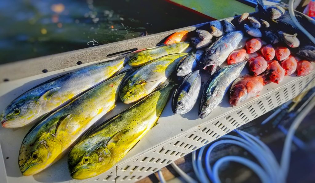 Mahi Fishing Stuart, FL