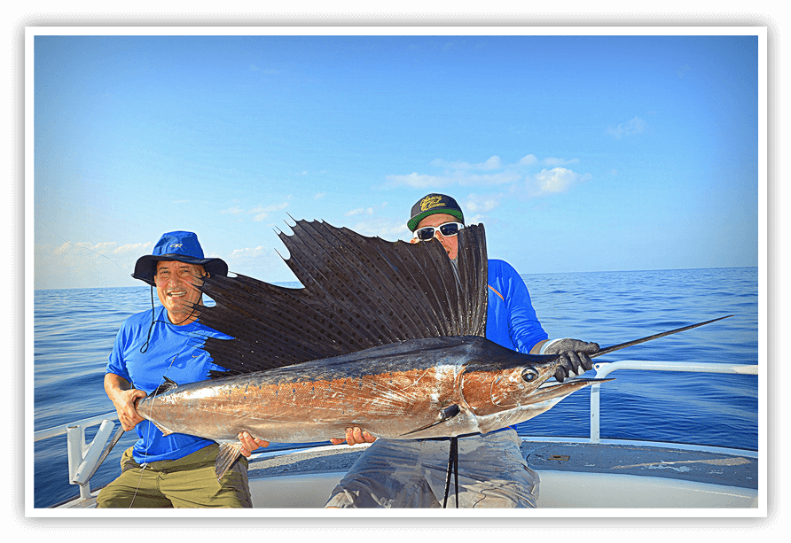 Sailfish Fishing Charter Stuart, FL